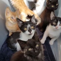 Bucket of kittens that came to us all needing foster homes