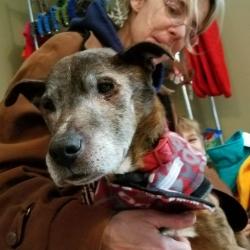 OLLIE, hospice dog fostered by Rosana Wuebben