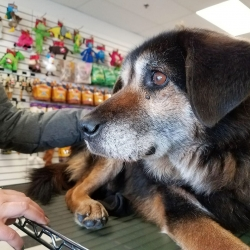 TEDDY, hospice dog fostered by Tracy Forstey